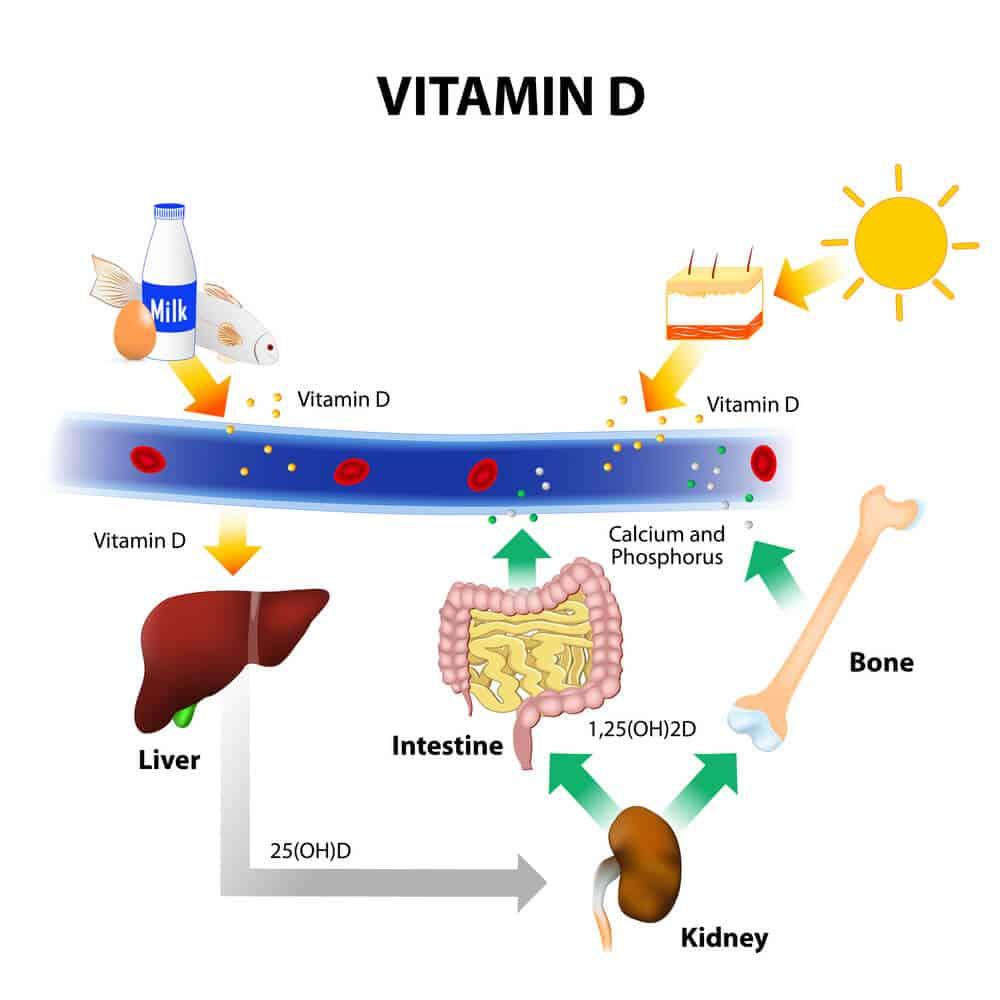 Vitamin D Mechanism