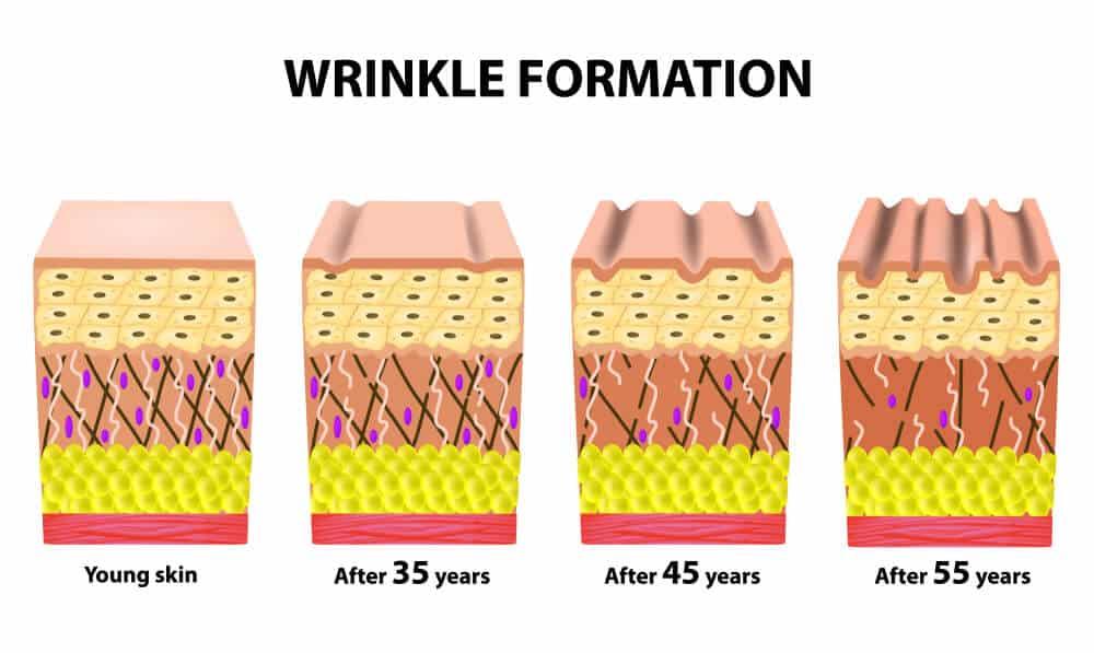 Collagen Derma Structure