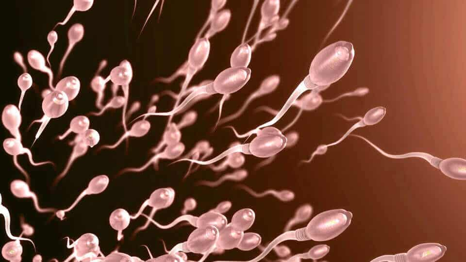 提高精子的活躍度